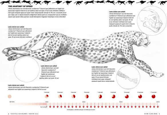Cheetah Illustration by Bryan Christie Design for National ...