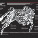 Cheetah Illustration by Bryan Christie Design for National Geographic